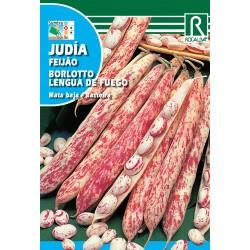 JUDIA BORLOTTO, 250 GR