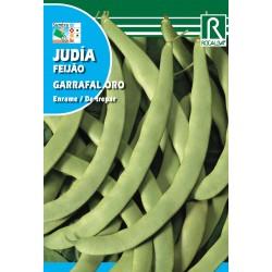 JUDIA GARRAFAL ORO, 250 GRS