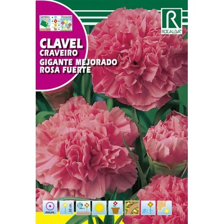 CLAVEL GIGANTE MEJORADO ROSA