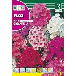 FLOX GIGANTE